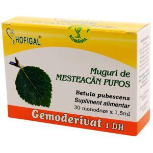 Muguri de mesteacan pufos - Gemoderivat30mon Hofigal